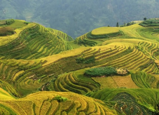 Zielony skarb Chin