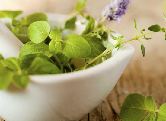 Właściwości lecznicze roślin – ziół, przypraw, kwiatów doniczkowych